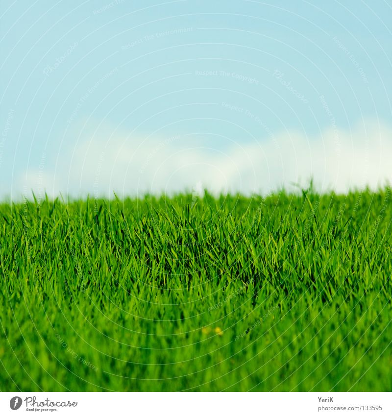 Nature Sky Flower Green Blue Plant Summer Joy Calm Clouds Colour Life Relaxation Meadow Grass Spring