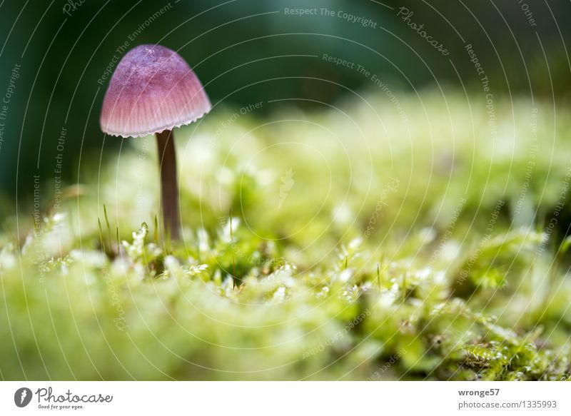 Nature Plant Green Colour Forest Yellow Autumn Natural Small Earth Violet Near Moss Mushroom Woodground Diminutive