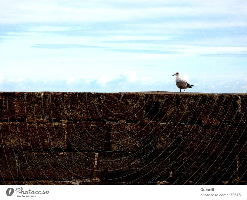 Sky Clouds Wall (barrier) Bird Horizon Seagull Ireland