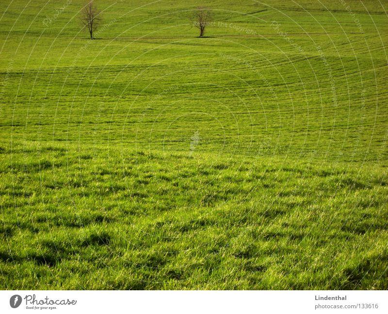 Green Tree Meadow Grass 2 Hill Pasture Juicy Make green Undulating Undulation Green space Uneven