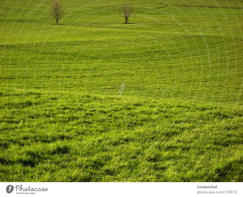 two hard surfers Meadow 2 Tree Grass Hill Pasture Uneven Undulation Juicy Undulating Exterior shot Deserted Copy Space bottom Copy Space middle Green space