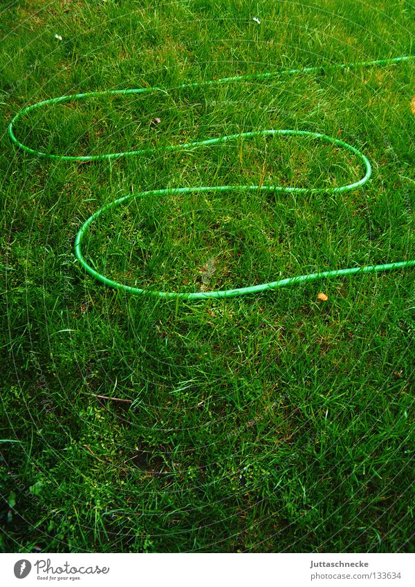 Water Green Summer Work and employment Meadow Grass Garden Wet Growth Lawn Leisure and hobbies Dry Cast Hose Gardening Gardener
