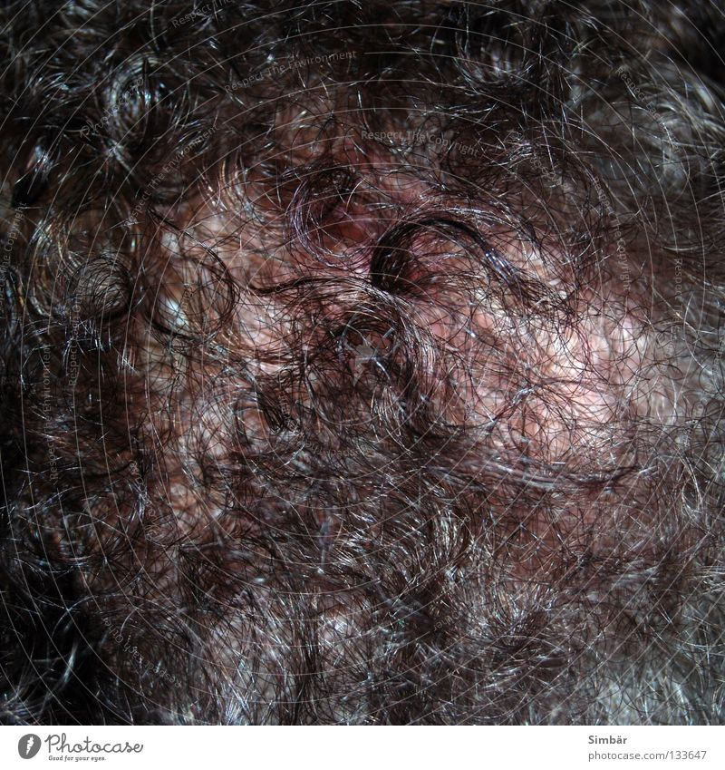 hairs everywhere hairs III Frizzy Hair loss Thin Hair and hairstyles Cut Haircut Meadow Black Gray Skeleton Growth Maturing time Macro (Extreme close-up)