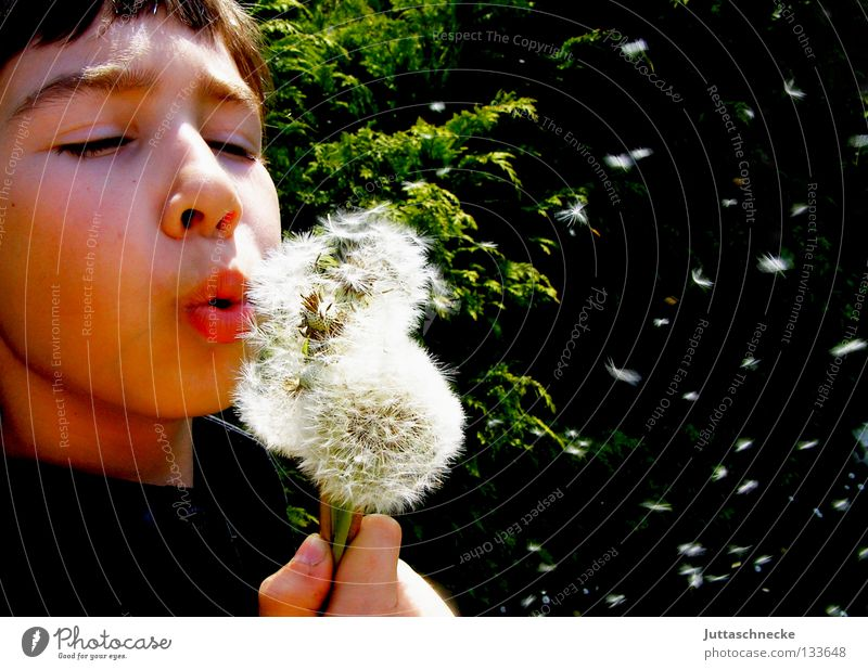 Child Flower Summer Joy Boy (child) Spring Garden Funny Flying Concentrate Dandelion Blow Seed Distribute