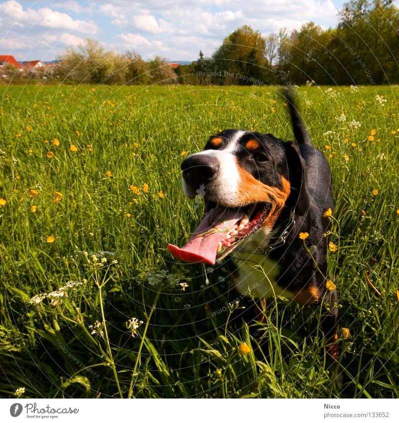 Sky Dog Green Flower Joy Clouds Animal Yellow Meadow Playing Grass Warmth Laughter Spring Field Leisure and hobbies