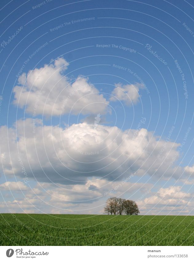 Nature Sky White Tree Green Blue Summer Clouds Far-off places Cold Meadow Spring Landscape Air Field Healthy