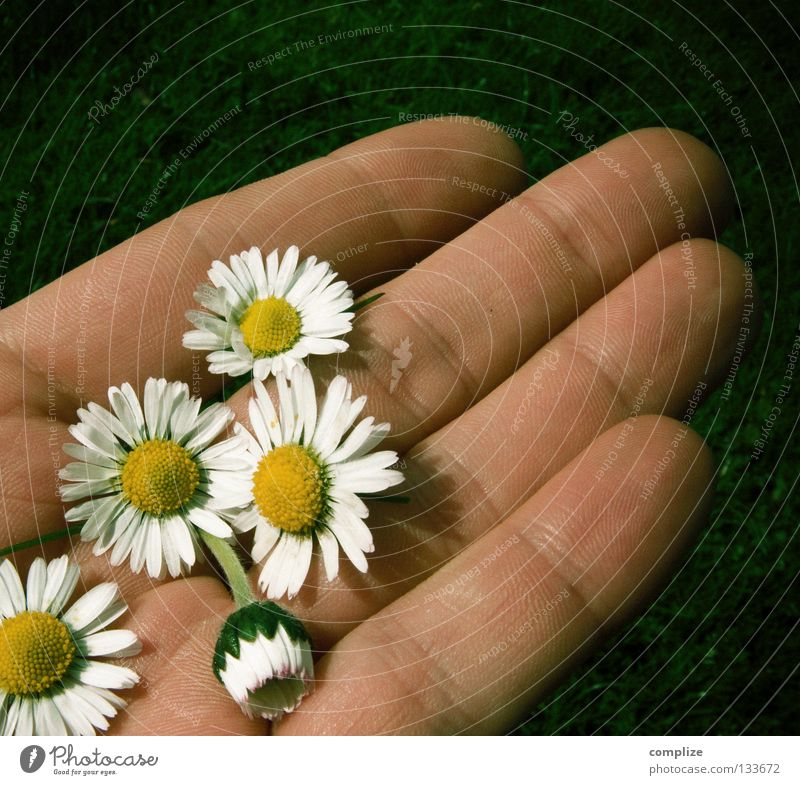 Hopeful romantic! Flower Plant Wellness Authentic Yellow White 2 Together Loneliness Looking away Hatred Daisy Growth Maturing time Spring Summer Chamomile Hand