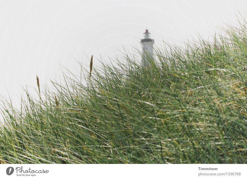 Nature Vacation & Travel Plant Green Landscape Calm Environment Emotions Gray Esthetic Serene Dune Lighthouse Denmark Marram grass