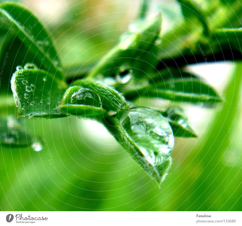 After the rain drops of water are held by a leaf spring already Plant green Clouds Rain Sun Drops of water Sky To fall Flying Water Wet flaked