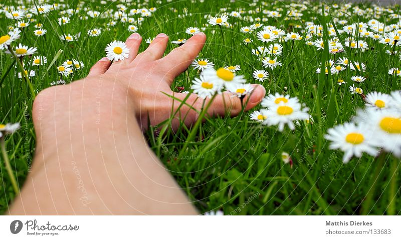 grand Summer Spring May April Beautiful weather Meadow Grass Green Daisy Flower Flower meadow Hand Fingers Wide angle Relaxation Closing time Weekend