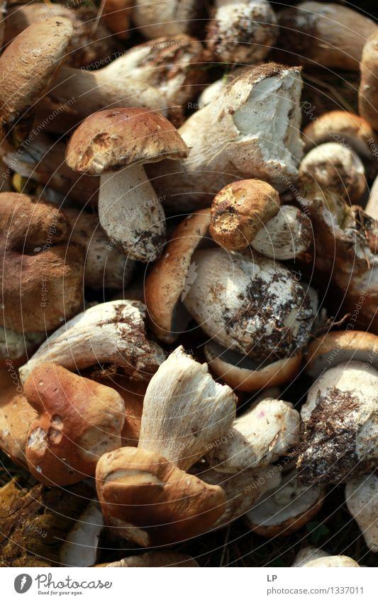 "shrums 4 Food Nutrition Eating Vegetarian diet Diet Fasting Slow food ""wild food,"" edible mushrooms food foraging Environment Nature Summer Autumn Plant"