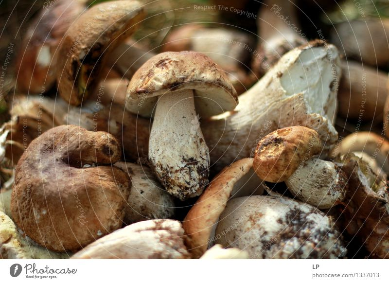 shrums 3 Food Vegetable Mushroom Boletus Lifestyle Healthy Wellness Leisure and hobbies Hiking Oktoberfest Thanksgiving Environment Nature Garden Firm Fresh