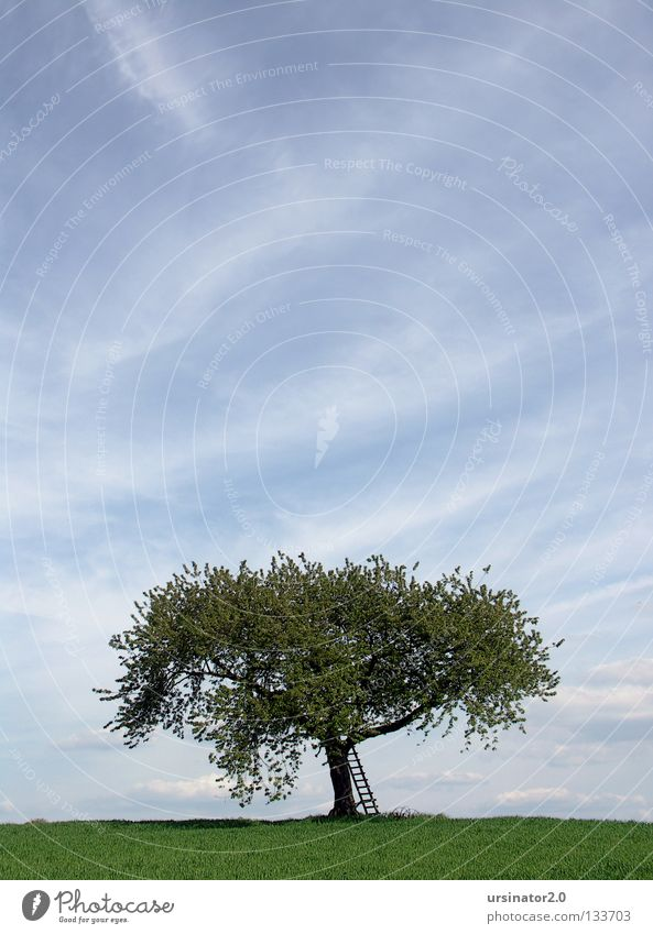 Old Sky White Tree Green Blue Clouds Far-off places Life Meadow Above Blossom Spring Landscape Field Germany