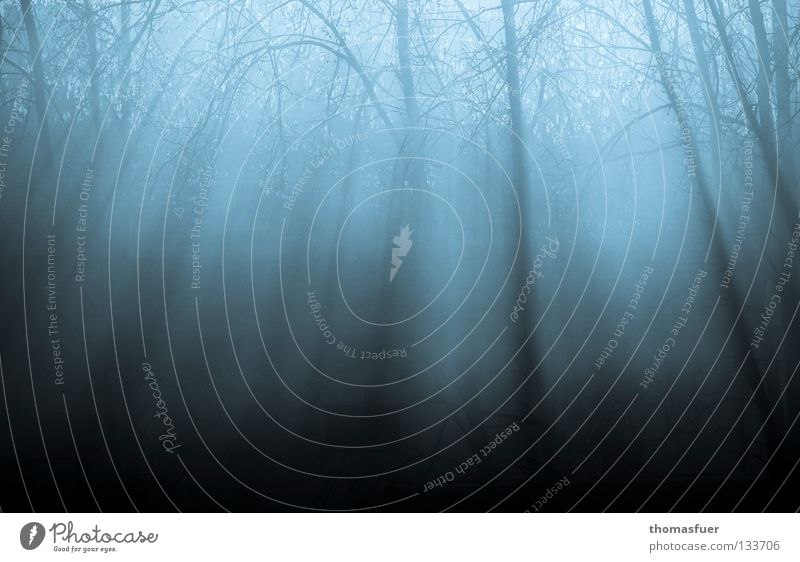 Tree Blue Calm Forest Lamp Dream Sadness Think Field Fog Beginning Hope Grief End Transience Distress