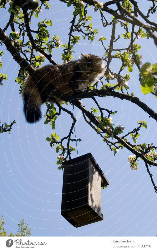 Tree Blue Summer Cat Bright Bird Hunting Fight Mammal Thief