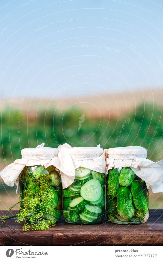 Pickled cucumbers made of home garden vegetables and herbs Vegetable Herbs and spices Organic produce Garden Summer Fresh Natural Green Basket Copy Space Dill