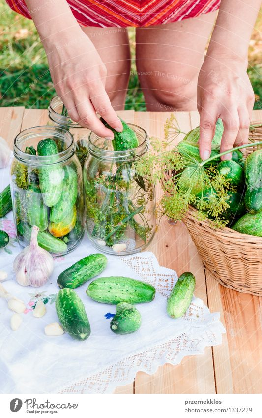 Pickling cucumbers with home garden vegetables and herbs Woman Green Summer Hand Adults Natural Garden Fresh Nutrition Herbs and spices Vegetable