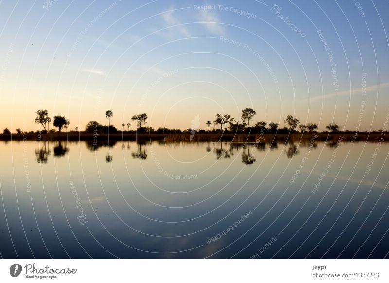 symmetry Nature Landscape Water Sky Clouds Horizon Sunrise Sunset Tree Bushes River bank Okavango Delta Palm tree Symmetry Mirror image Exterior shot Deserted