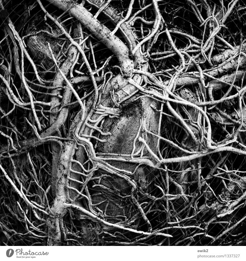 Nature Plant Life Natural Authentic Mysterious Many Claustrophobia Thin Firm Connection Bizarre Muddled Narrow Character Root