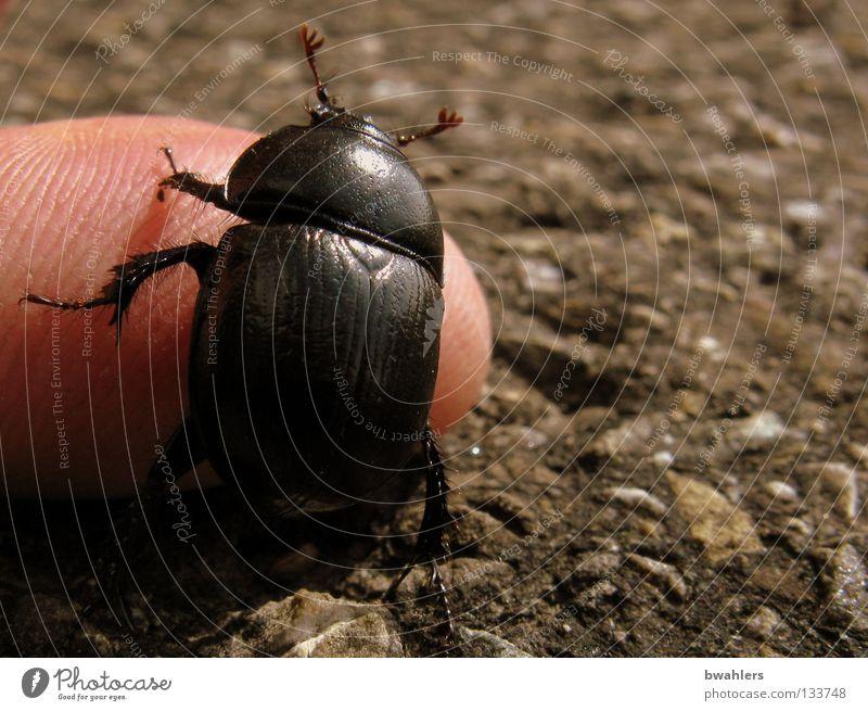 Man Hand Black Street Lanes & trails Legs Fingers Wing Traffic infrastructure Beetle Feeler Crawl Tar