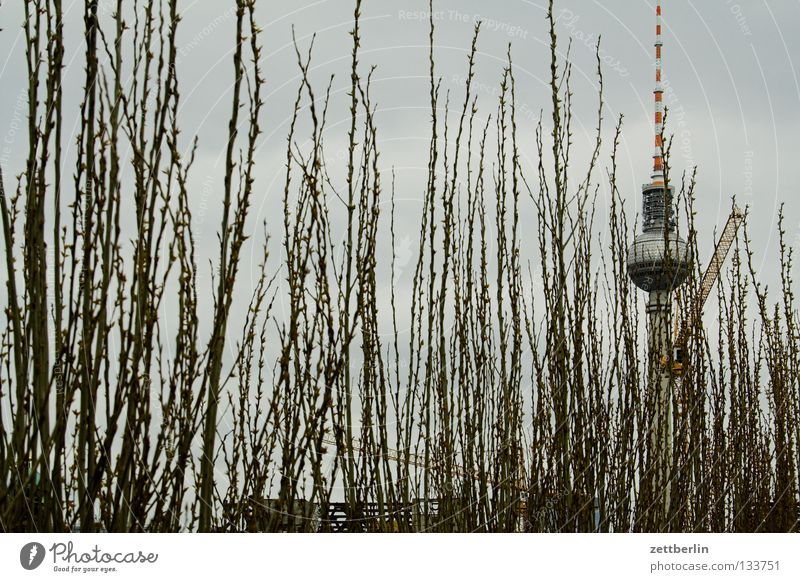 Hidden building Alexanderplatz Hedge Bushes Park Maturing time Landmark Palace of the Republic Dismantling Monument Berlin Garden Berlin TV Tower