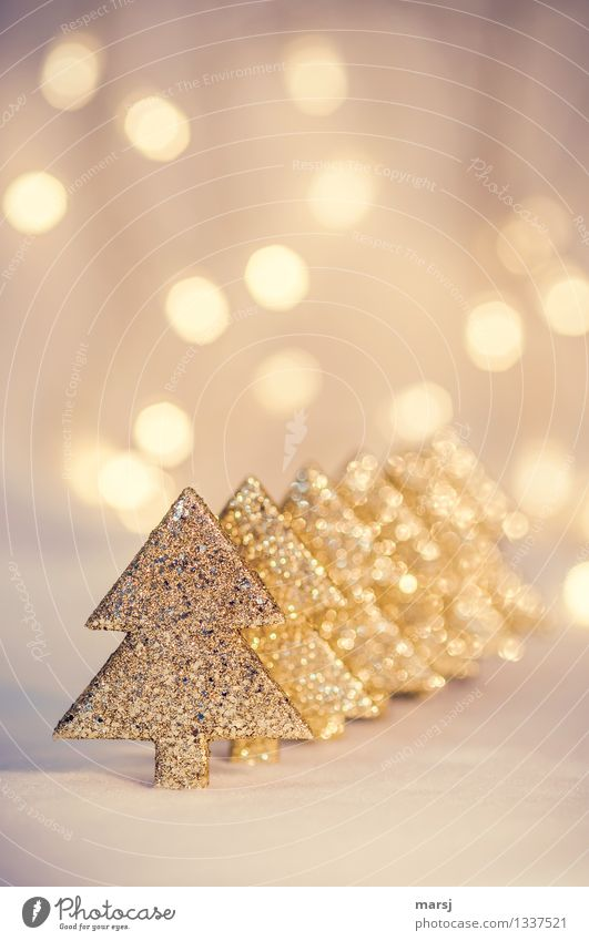 Christmas & Advent Feasts & Celebrations Glittering Illuminate Decoration Gold Happiness Kitsch Christmas tree Trade Anticipation Sharp-edged Beaded