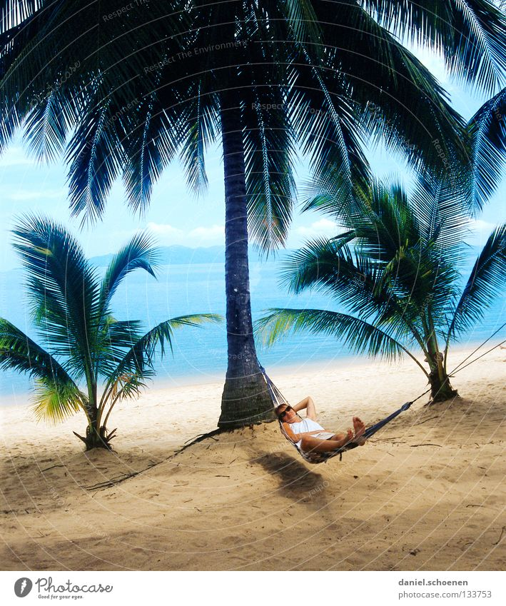 Who wants that?!??? Palm tree Beach Hammock Palm beach Thailand Light Vacation & Travel Relaxation Ocean Coast Leaf Tree trunk Physics Yellow Green Cyan