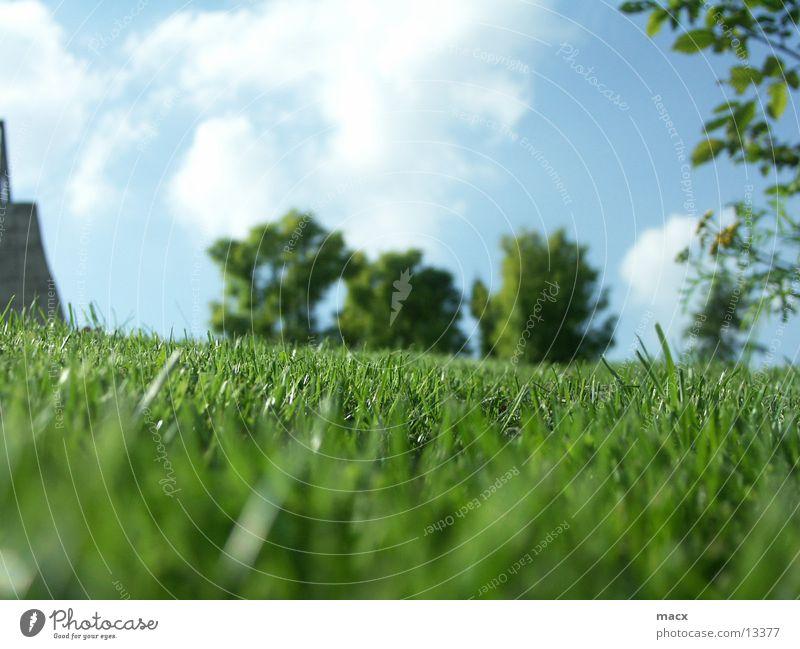 MoonsVerde Grass Tree Green Calm Serene Nature Sky