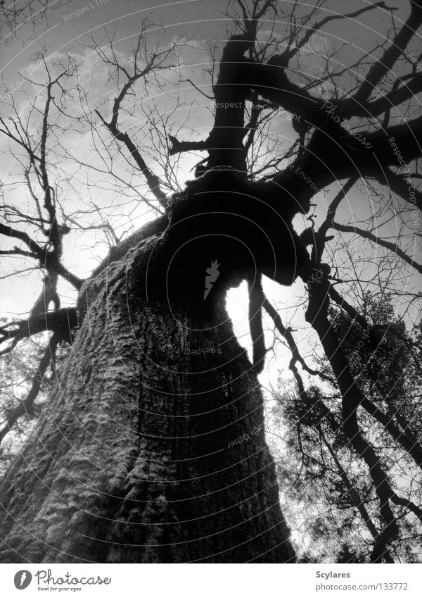 Tree Forest Dark Death Fear Threat Branch Transience Creepy Tree trunk Panic Fairy tale Tree bark Gray scale value Brittle