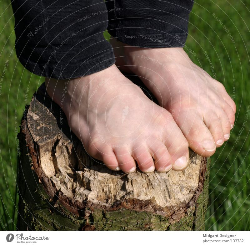 tree stand Skin Human being Young woman Youth (Young adults) Life Legs Feet 1 18 - 30 years Adults Tree Pants Wood Stand Green Tree trunk Tree bark Toes