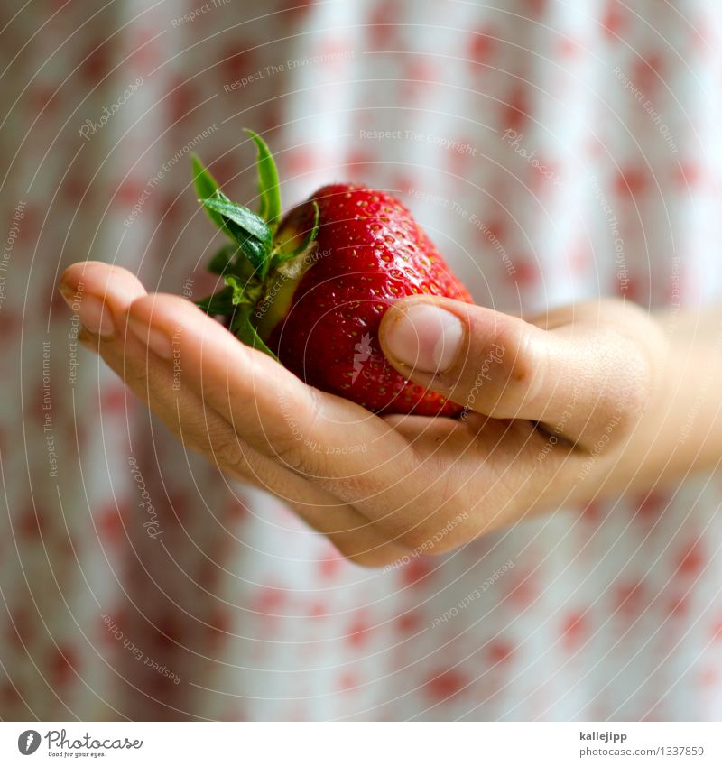 Human being Child Nature Hand Girl Eating Fruit Infancy Success Nutrition Arm Large Fingers Sweet To hold on Delicious