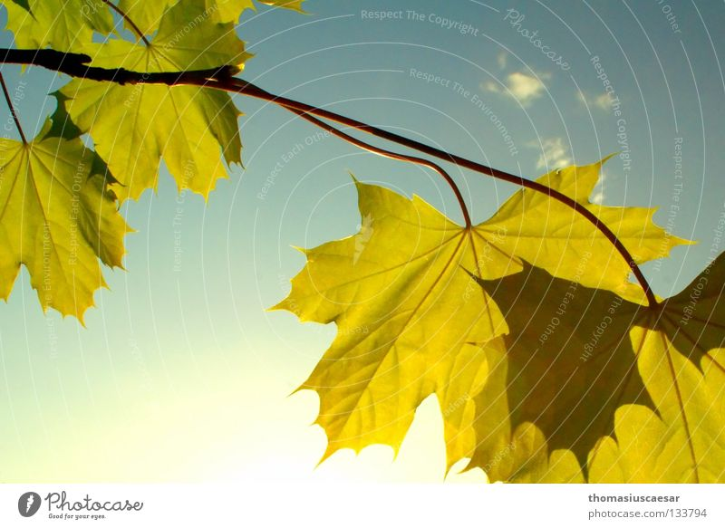 Nature Sky Tree Sun Green Summer Leaf Yellow Autumn Jump Spring Warmth Bright Fresh Happiness Physics