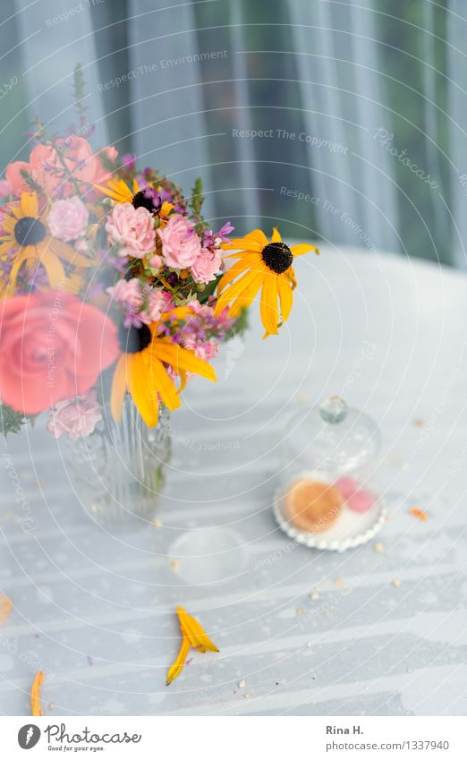 Feasts & Celebrations Authentic Table Blossoming Wet Bouquet Baked goods Tablecloth Vase Remainder Faded Insect repellent