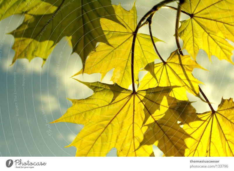 Nature Sky Tree Sun Green Blue Summer Leaf Yellow Autumn Emotions Jump Spring Bright Fresh Branch