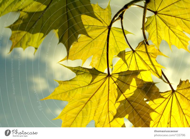 spring bustle Spring Green Yellow Fresh Leaf Emotions Tree Autumn Summer Maple tree Jump Sky Nature Bright Blue Branch Sun trees