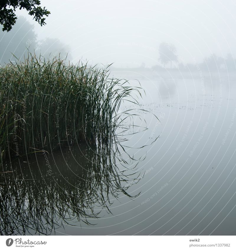 Sky Nature Plant Water Landscape Calm Far-off places Environment Autumn Natural Moody Glittering Air Fog Idyll Wet
