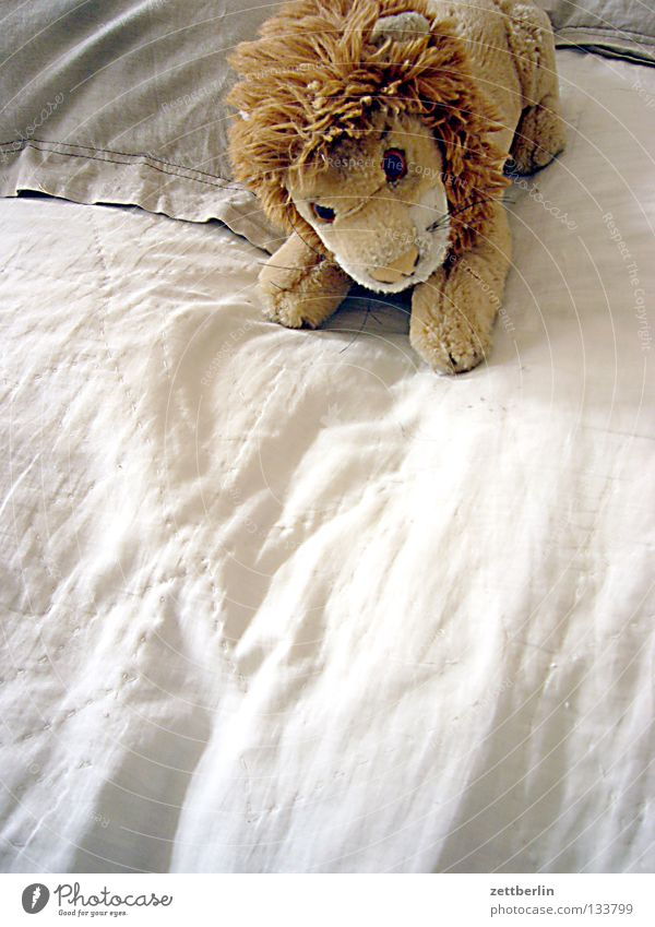 lion Lion Cuddly toy Toys Soft Mane Bed Duvet Cushion Leisure and hobbies Children's room day cover daytime lion king of the animals Copy Space bottom