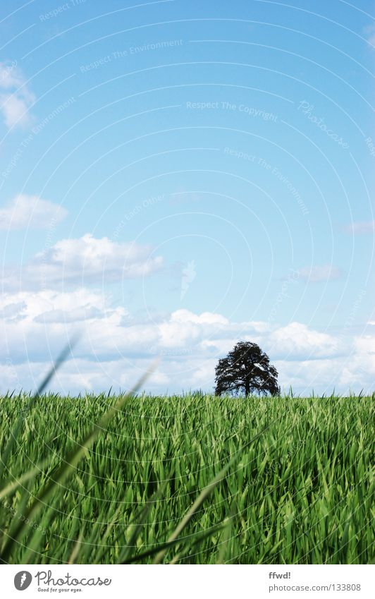 summer breeze Meadow Grass Blade of grass Field Agriculture Clouds Tree Spring Summer Calm Harmonious Fresh Light heartedness Easy Green Ease Sky Nature