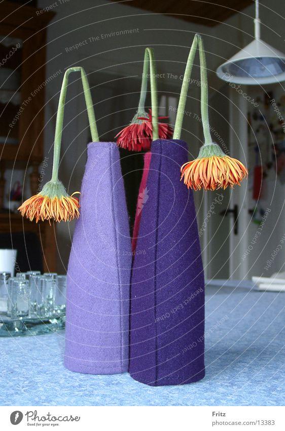 Flower Living or residing Vase Aster