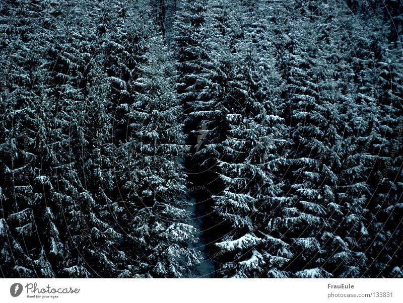 Nature Blue Tree Winter Clouds Forest Landscape Death Dark Meadow Cold Snow Gray Sadness Ice Weather