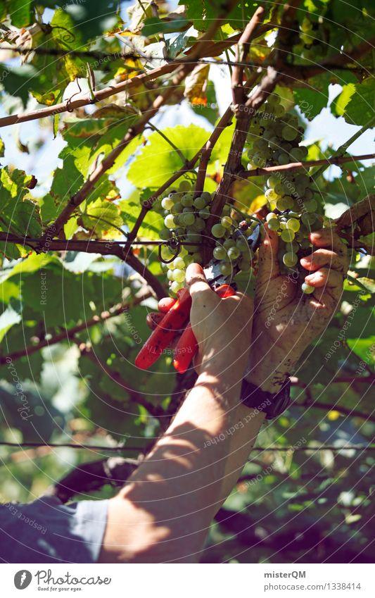 Vintage I Art Work of art Esthetic Grape harvest Wine Vine Vineyard Wine growing Bunch of grapes Vine leaf Winery Harvest Seasonal farm worker Colour photo