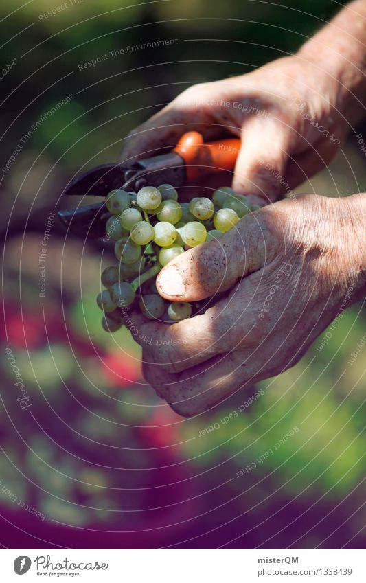 Art Contentment Esthetic Vine Wine Harvest Work of art Grape harvest Vineyard Wine growing Bottle of wine Bunch of grapes Vine leaf Winery Seasonal farm worker