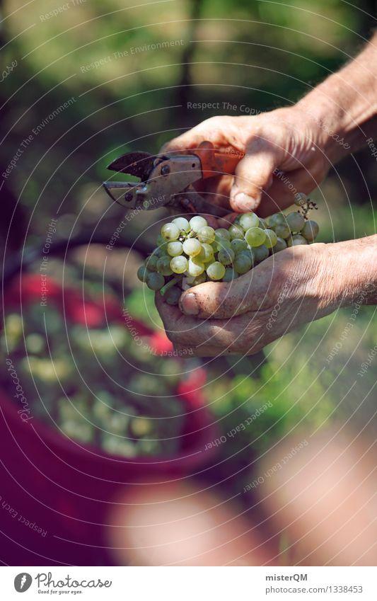 Vintage III Art Work of art Esthetic Wine Vine Vineyard Wine growing Bunch of grapes Grape harvest Vine leaf Winery Harvest Seasonal farm worker Colour photo