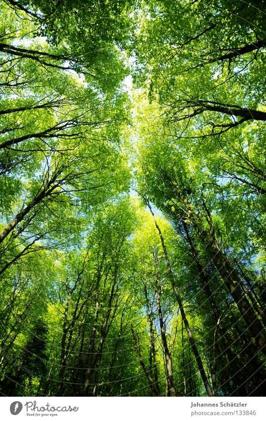 Nature Sky Tree Green Plant Summer Calm Leaf Clouds Colour Forest Life Above Spring Line Tall