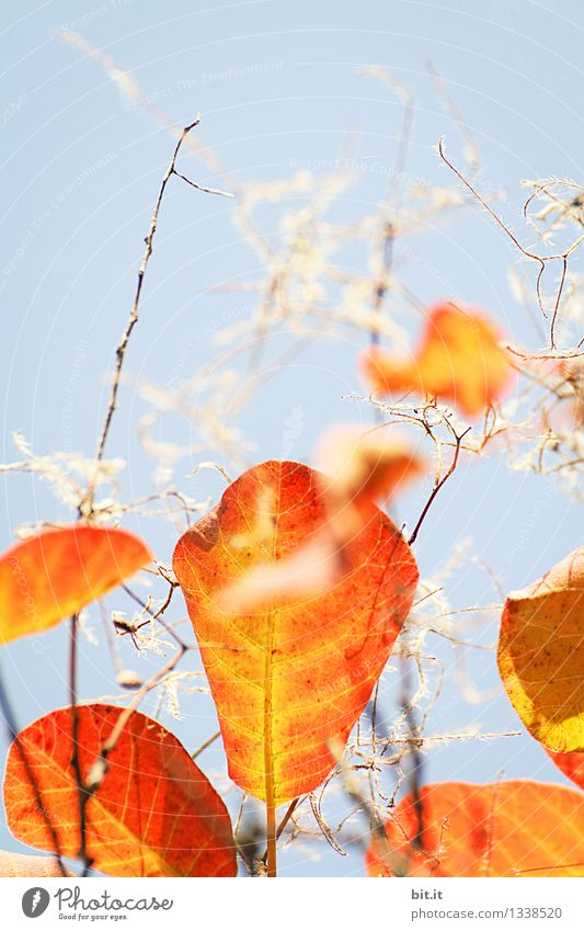 Sky Nature Vacation & Travel Plant Blue Tree Leaf Forest Warmth Autumn Garden Time Moody Orange Decoration Transience