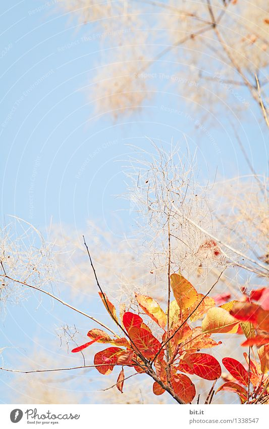 Sky Nature Plant Blue Tree Leaf Warmth Autumn Happy Garden Time Moody Orange Bushes Transience Beautiful weather
