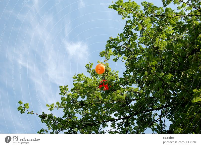 Early end Spring Balloon Helium Red Tree Treetop Leaf canopy Disaster Get stuck Joy Aviation Sky sky blue Orange Blue Vacation & Travel End