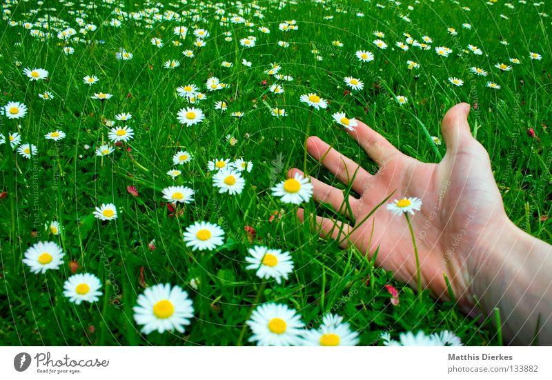 Human being Hand Green Beautiful Vacation & Travel Summer Flower Joy Calm Relaxation Meadow Life Freedom Grass Garden Spring