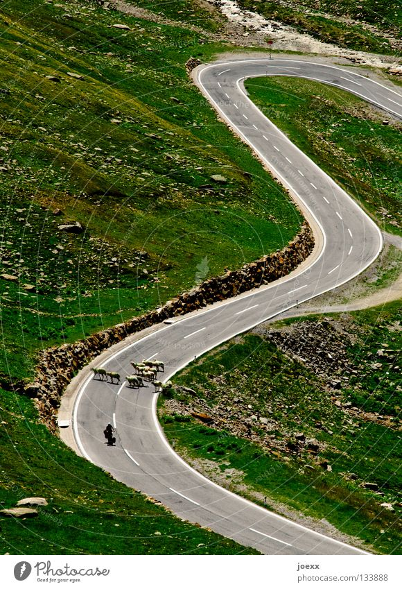 Street Meadow Mountain Going Closed Wait Driving Stop Sheep Traffic infrastructure Narrow Upward Barrier Curve Boredom Motorcycle