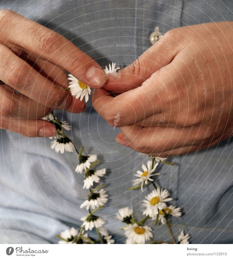 Flower Joy Transience String Luxury Jewellery Bouquet Chain Daisy Picnic Treetop Fragile Knot Connectedness Delicate Hawaii